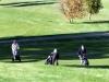 golf-15